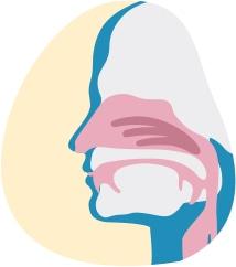 Илюстрация, която показва дихателните пътища през носа и устата